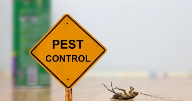 3 Things You Can Do To Get Rid of Pests in Your Home