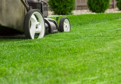 Reasons You Should Hire Lawn Care Experts