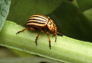 4 Reasons Why Pests Are So Damaging