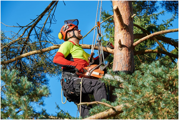 3 Things to Know Before you Hire a Local Tree Surgeon for Bognor Regis